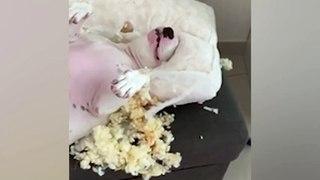 Ce chien s'est complètement déchaîné sur ce pauvre coussin