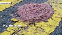 in-times-of-distress-earthworms-form-herds-for-survival