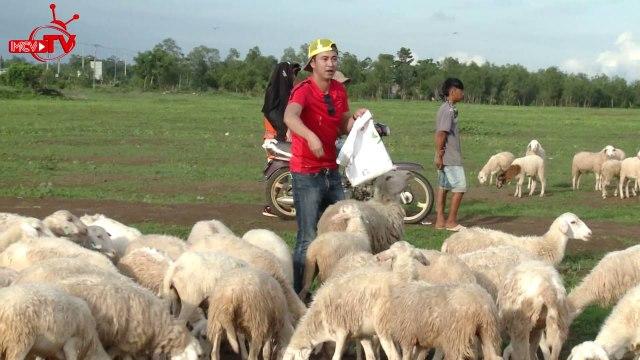 Xem người đẹp Ny Saki tung tăng lùa cừu trên cánh đồng lộng gió.
