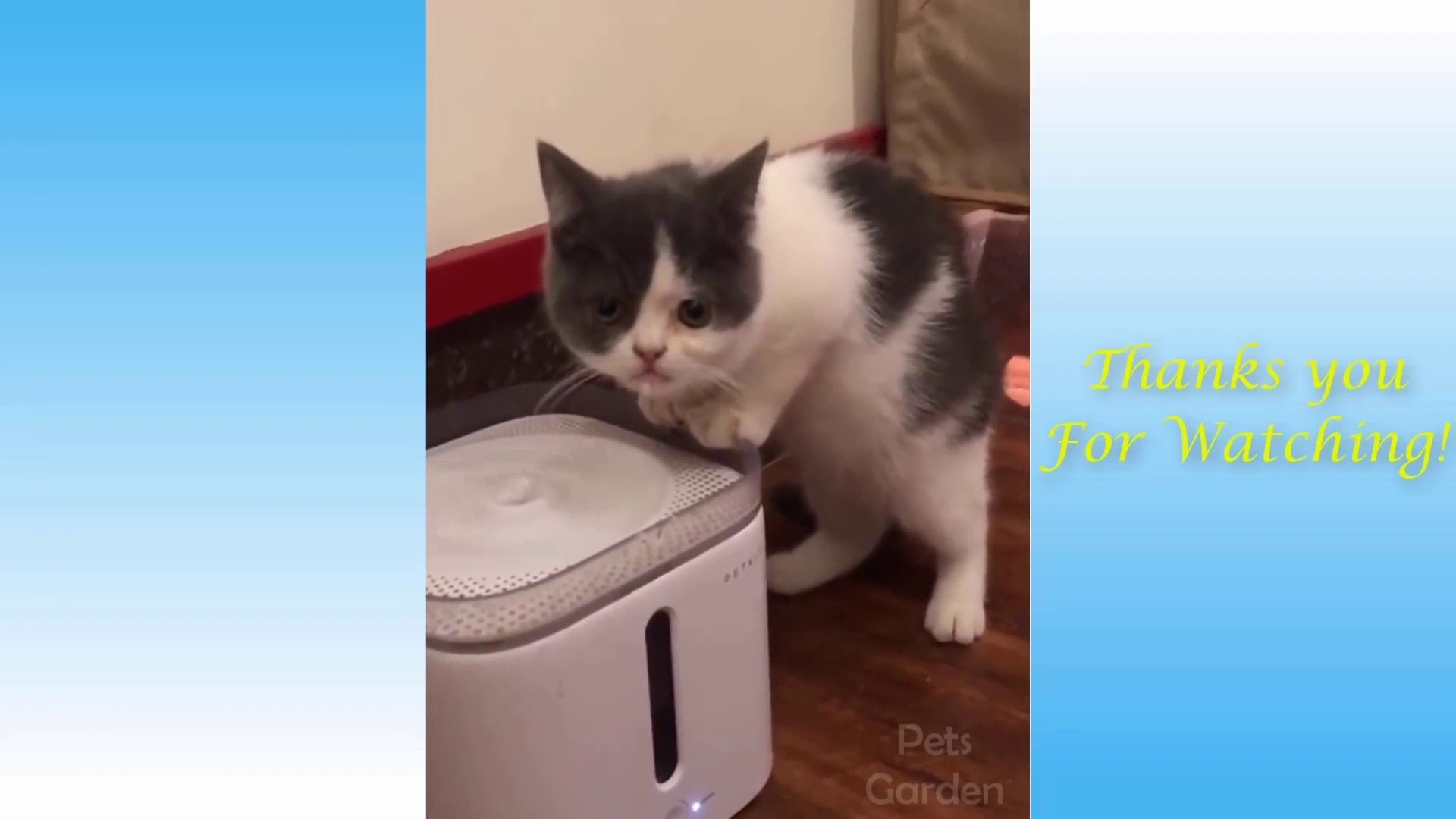 Cute Pets And Funny Animals Compilation - Pets Garden