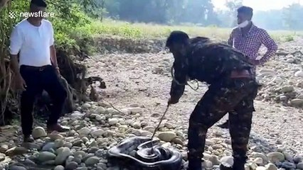 Massive 16-foot-long python rescued in northern India