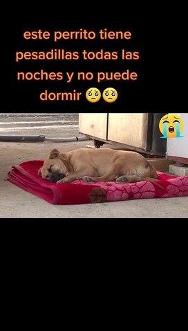 El conmovedor video de un perrito que llora mientras duerme tras sufrir maltrato