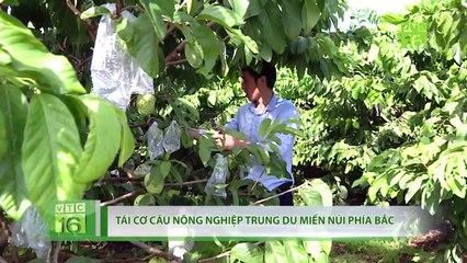 Trung du miền núi phía Bắc chuyển đổi 250.000 ha cây ăn quả | VTC16