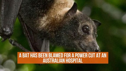 This Bat Caused Hospital Issues