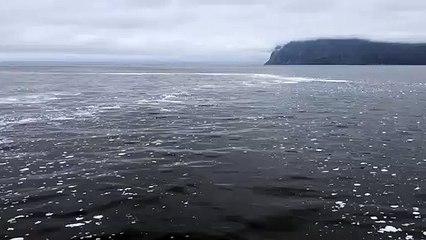 Allarme inquinamento in Kamchatka, nell'estremo oriente russo: Greenpeace sul posto