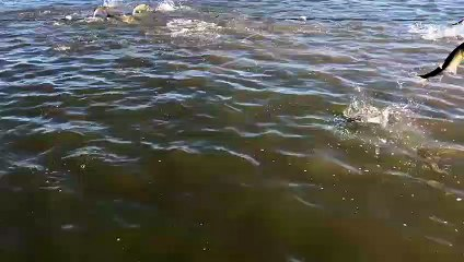 fishes are going crazy VID ID - VIDID