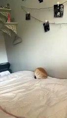 rabbit falling off bed VID ID - VIDID