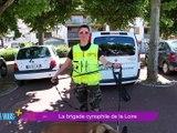 Connaissez vous Jungle l'un des malinois de l'équipe cynophile de la gendarmerie de notre département , non ? alors découvrez le cette semaine dans 7 à vous ! -      7 à Vous - TL7, Télévision loire 7
