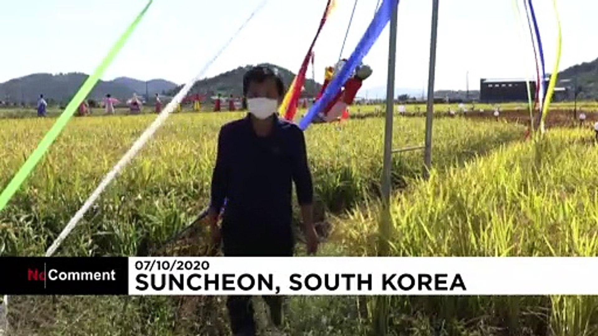 شاهد: رسومات عملاقة من نبات الأرز تحث سكان كوريا الجنوبية على الابتهاج وسط جائحة كورونا
