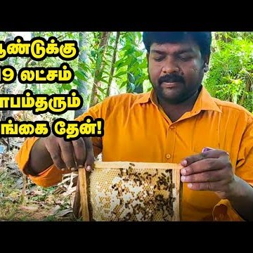 Honey Manufacturing Farm & Tips | Business Tricks & Safety Measures | Bees