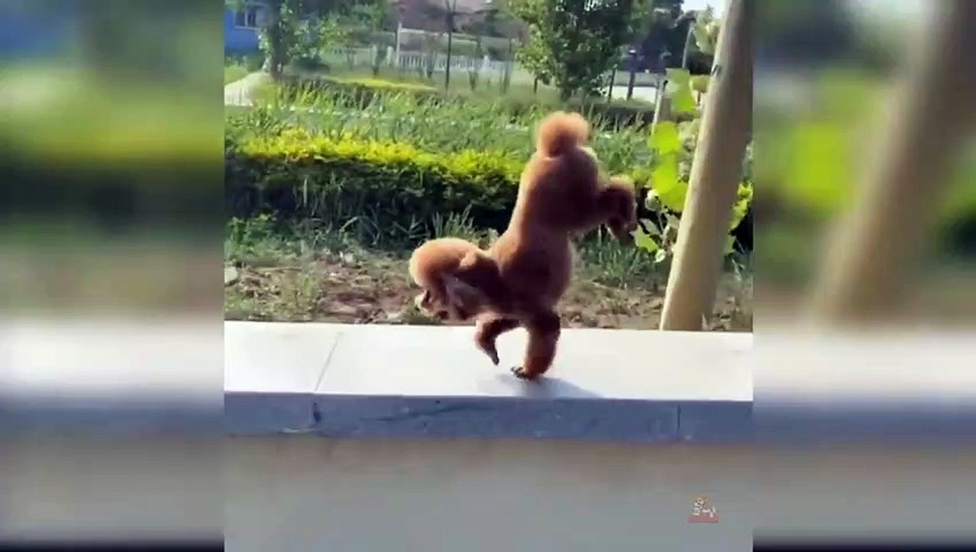 Funny Cute Dogs Funny Videos