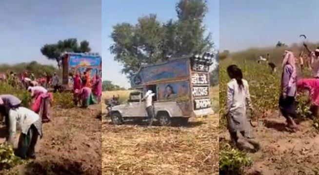 Rajasthan : खेतों में DJ बजाकर मजदूर डांस करते हुए कर रहे फसलों की कटाई, देखें वायरल VIDEO