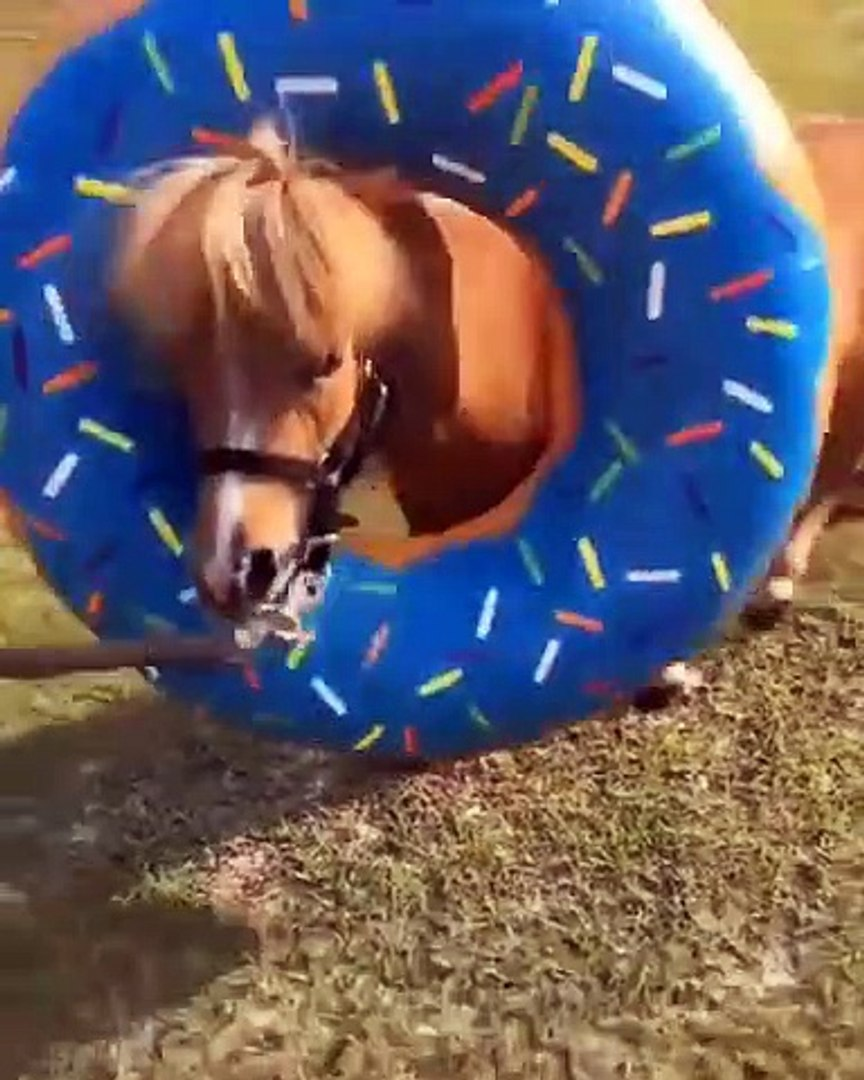Cute And Funny Horse Videos Compilation Cute Moment And Soo Cute 5 Video Dailymotion
