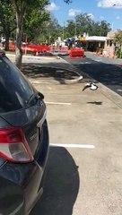 Une araignée géante se balade sur sa voiture mais en Australie le problème se règle rapidement