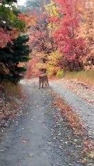 Un joggeur poursuivi par un cougar au beau milieu de la forêt