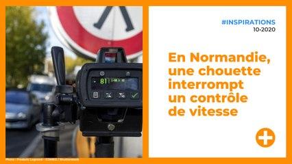 En Normandie, une chouette interrompt un contrôle de vitesse