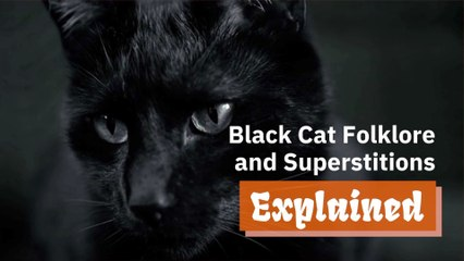 The Stories About Black Cats