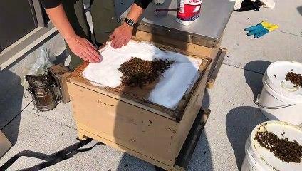 Préparation des ruches pour l'hiver