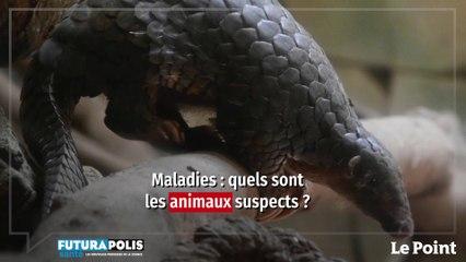 Aurélie Binot : « Il y a des animaux plus suspects que d'autres »