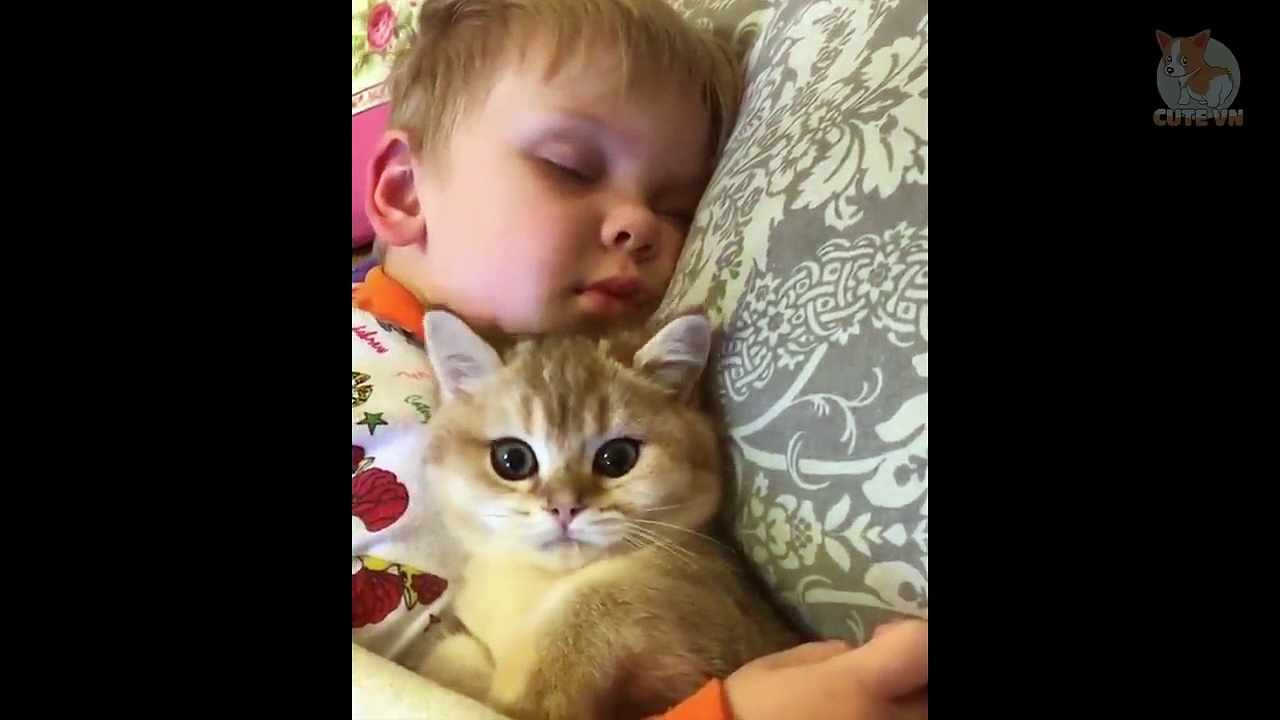 Happy Cats Compilation – Cutest Cats   – Cute Kittens    #Cats #Cute #Pets #kitten #kittens