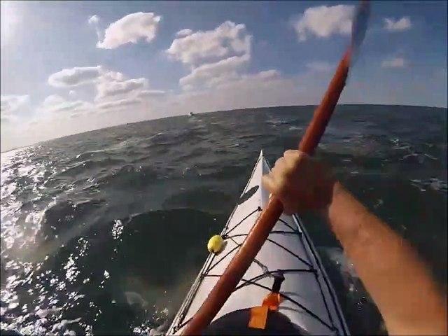Incroyable : un dauphin saute par dessus ce kayakiste !