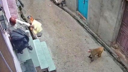 Monkey attacks elderly man in shocking CCTV video