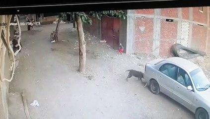 Un chat aide un enfant attaqué par un chien dans la rue !