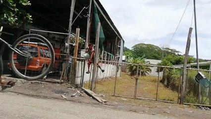 Un voleur de citrons tente de s'échapper mais tombe sur une clôture électrique !