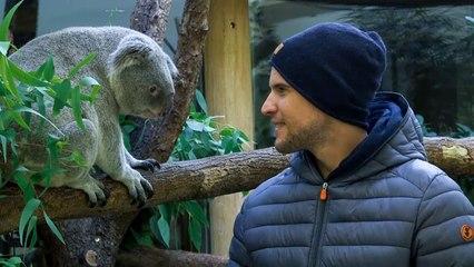 Tennis star Thiem adopts newborn koala baby