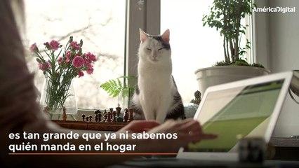Señales para reconocer que tu gato es el 'rey de la casa'