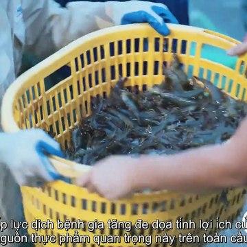 Giải pháp nuôi tôm an toàn theo công nghệ sinh học của BiOWiSH Việt Nam