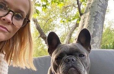 Reese Witherspoon dá adeus a cadela de estimação