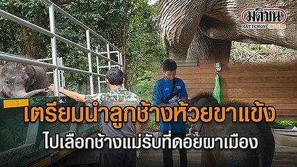 เตรียมนำลูกช้างห้วยขาแข้ง ไปเลือกช้างแม่รับที่ดอยผาเมือง