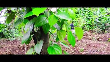 The World Of Maya - New Telugu Webseries Part 1 || Latest Telugu Short Films || Silly Tube