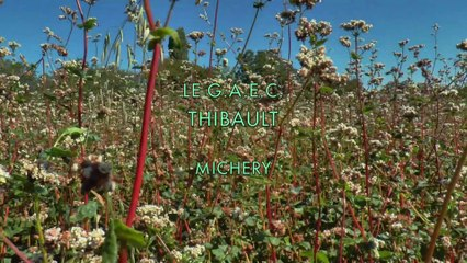 LE GAEC THIBAULT - MICHERY