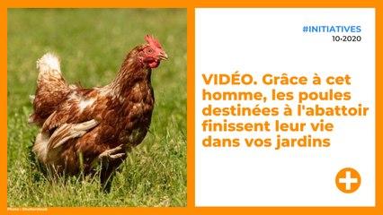 VIDÉO. Grâce à cet homme, les poules destinées à l'abattoir finissent leur vie dans vos jardins