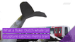 What a fluke: Dutch whale tail sculpture catches metro train, and other top stories in strange news from November 05, 2020.