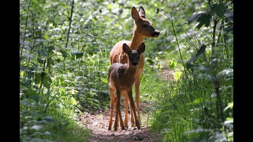Deer heads found near Biden-Harris Black Lives Matter signs in Oregon cops