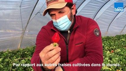 C si bon, la fraise de Carpentras