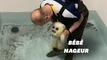 Ce bébé phoque qui prend son bain au Japon va vous faire fondre