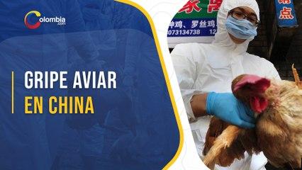 La gripe aviar H10N3 llega a los humanos: ¿qué se sabe del primer contagio en China?