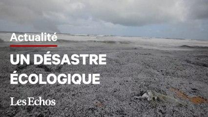 Des plages du Sri Lanka recouvertes de billes de plastique après l'incendie d'un bateau
