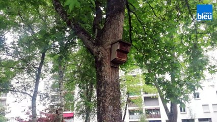 À Billère les pratiques des citadins ont chassé les oiseaux