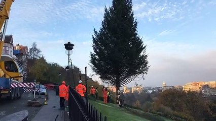 Watch: Edinburgh's Christmas tree goes up on The Mound