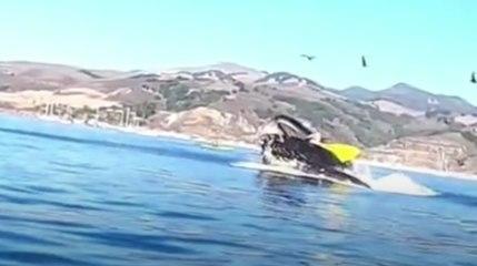 Vidéo Choc : Une baleine avale deux femmes en kayak en Californie