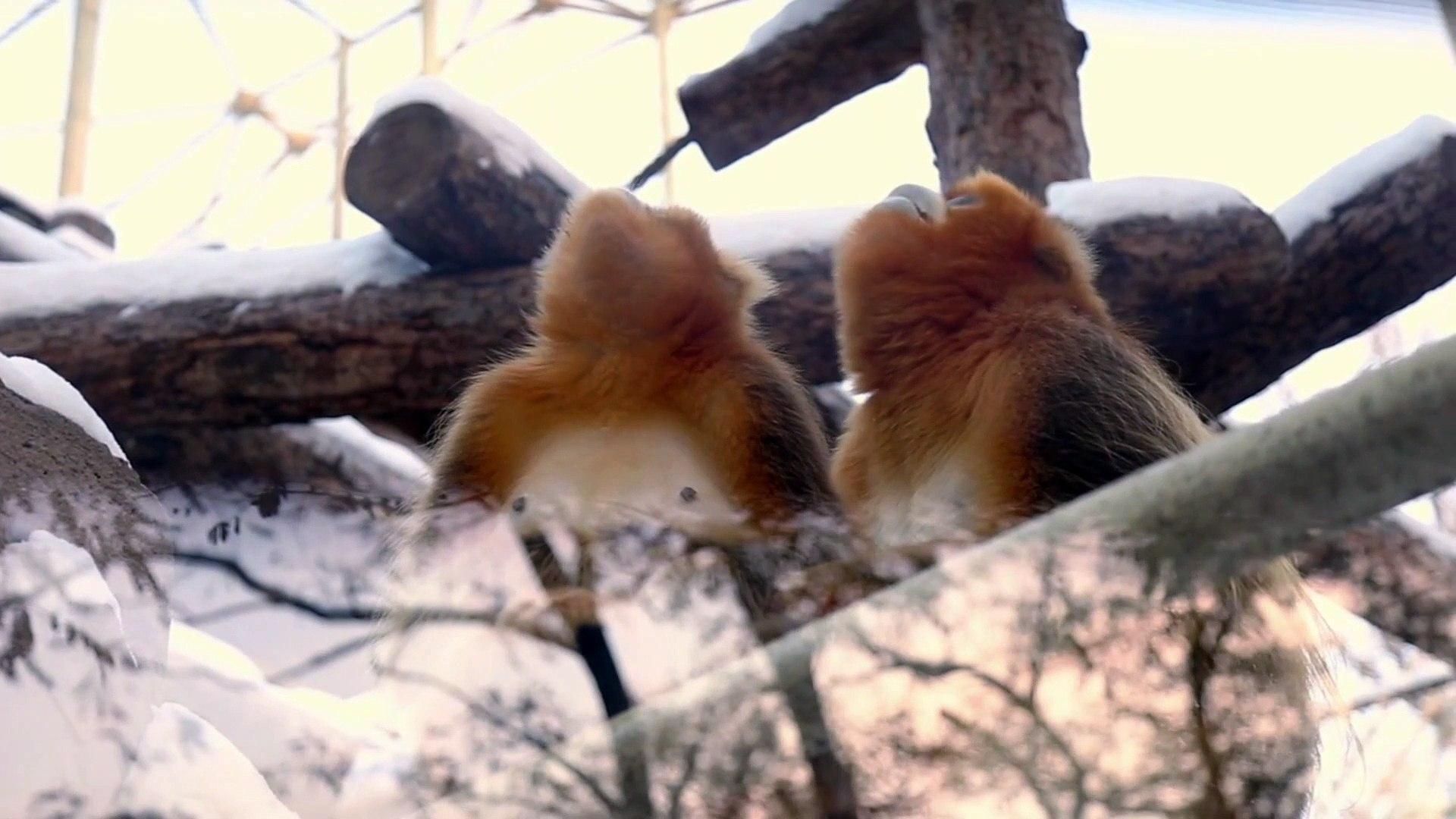 Cute Monkey Videos