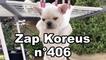 Zap Koreus n°406
