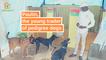 Burkina Faso: Paulin, the young trader of pedigree dogs