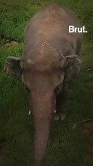 The life story of Kaavan the elephant