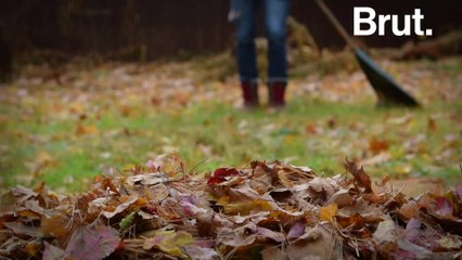 Should we be picking up dead leaves?